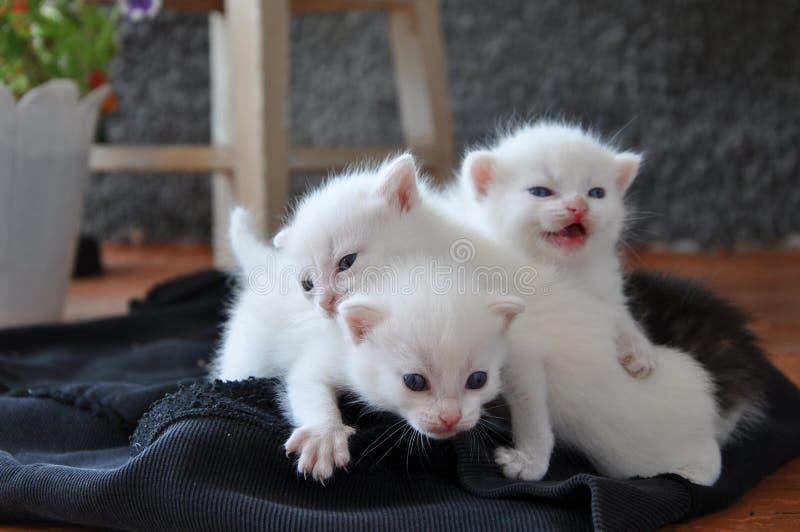 Trois chatons nouveau-nés sur le porche images libres de droits