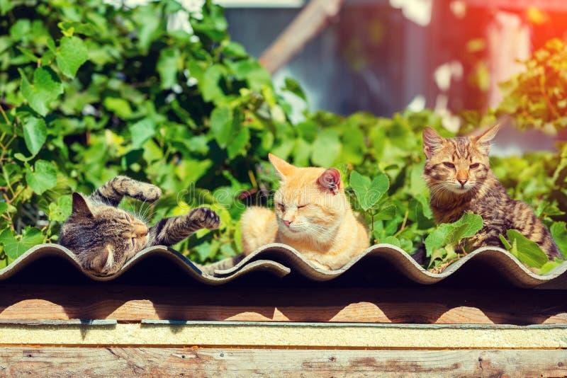 Trois chatons se trouvant sur une surface onduleuse extérieure photographie stock libre de droits