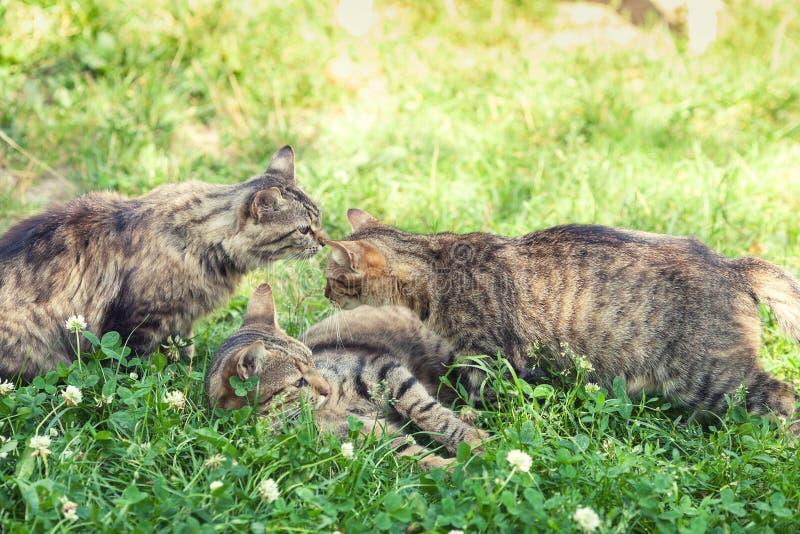 Trois chatons sur l'herbe photographie stock