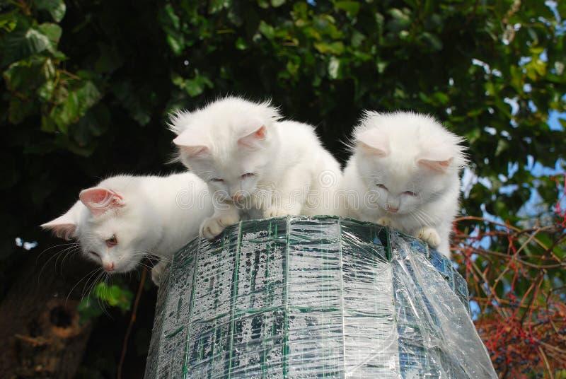 Trois chatons sur le jardin clôturant le roulis photographie stock libre de droits