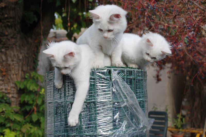 Trois chatons sur le rouleau de clôture de jardin image libre de droits