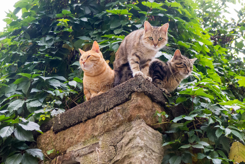 Trois chats images stock