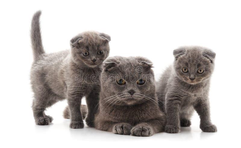 Trois chats gris images libres de droits