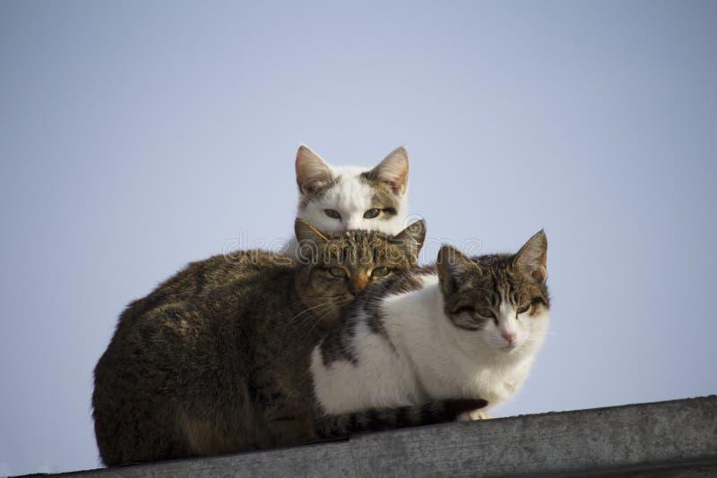 trois chats se reposant sur le toit et regardant la caméra photographie stock libre de droits