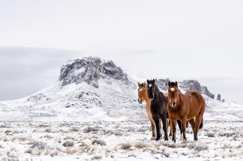 Trois chevaux de différentes couleurs sur un champ neigeux dans un jour nuageux avec une montagne sur le fond photos stock