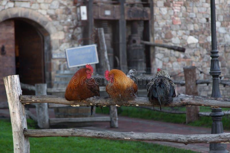 Trois coqs sur une barrière photographie stock