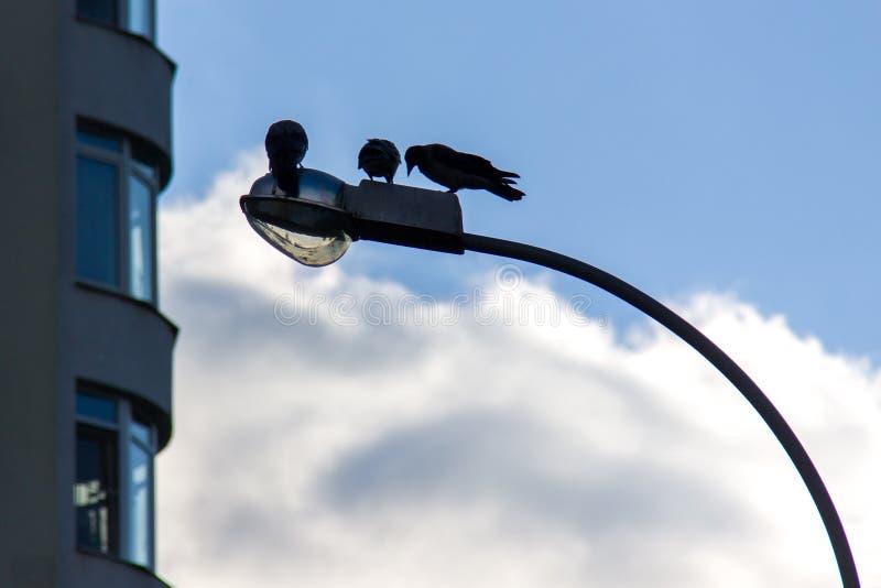 Trois corbeaux se reposent sur la lanterne devant l'immeuble photo stock