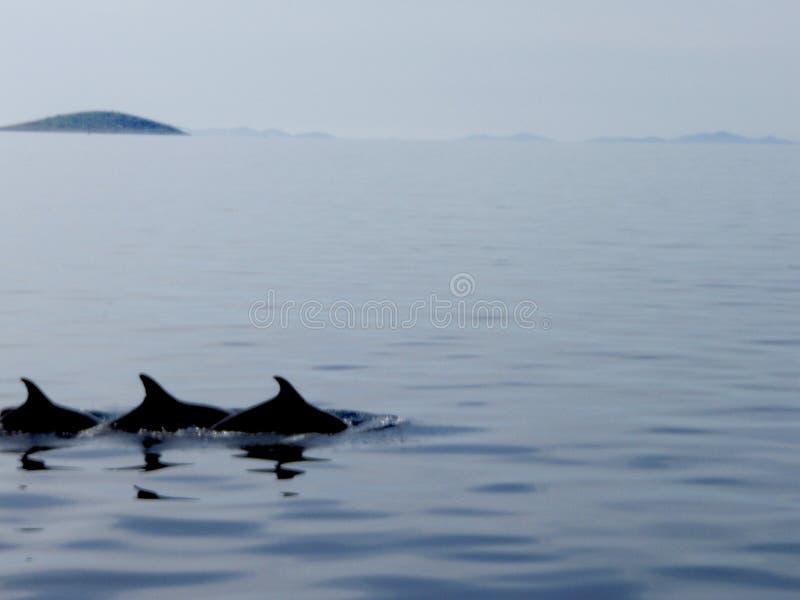 Trois dauphins image stock