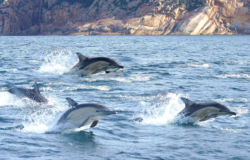 Trois dauphins photographie stock