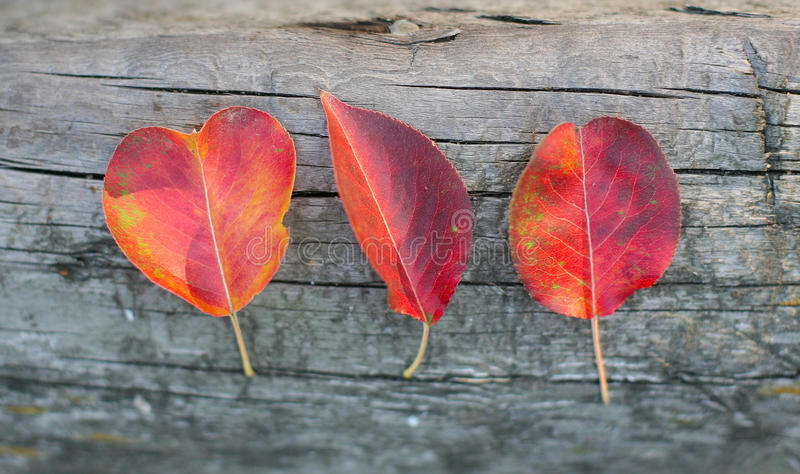 Download Trois Feuilles D'automne Rouges Photo stock - Image du orange, couleurs: 45359822