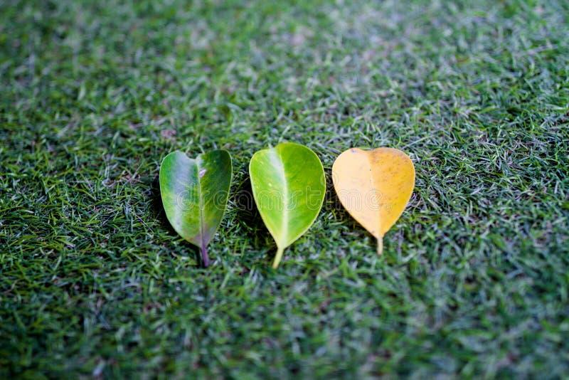 Trois feuilles sur l'herbe artificielle image libre de droits