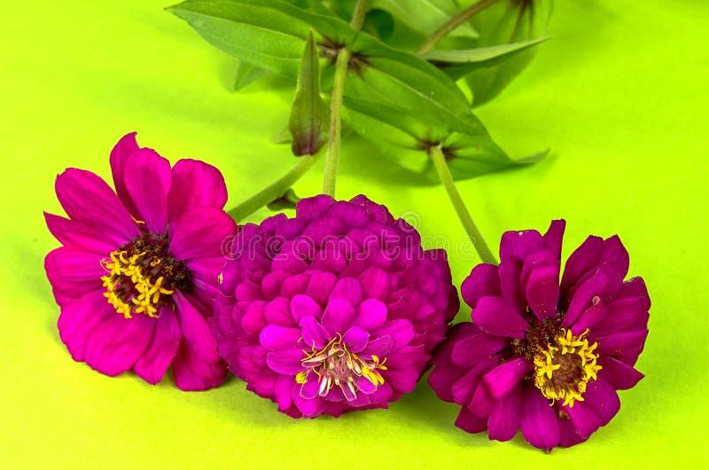 Trois fleurs photos libres de droits
