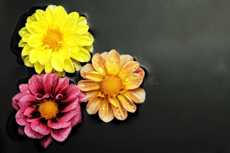 Trois fleurs dans l'eau photos stock