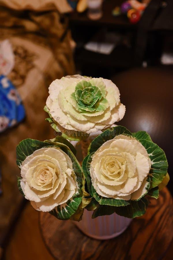 Trois fleurs de brassica étroitement  photographie stock libre de droits