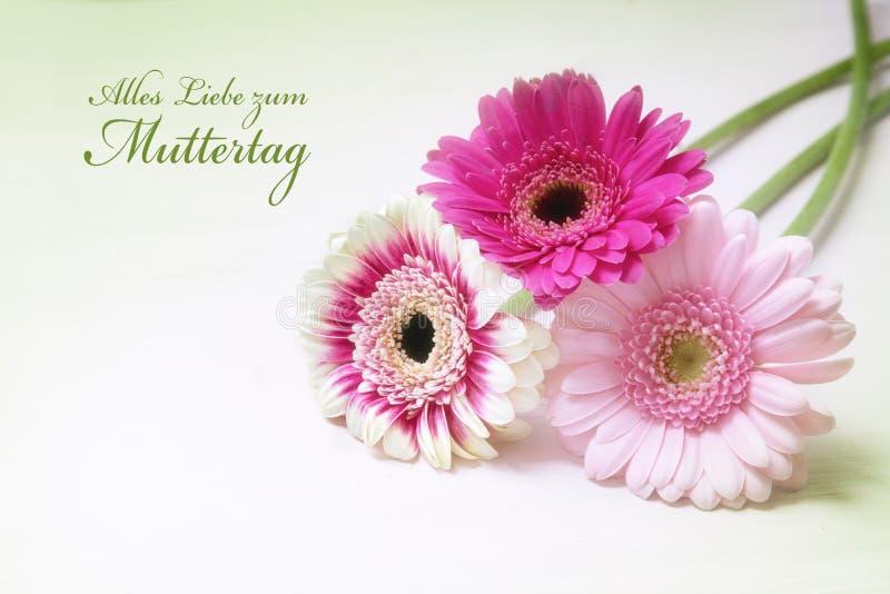Trois fleurs de gerbera dans rose et blanc sur un fond lumineux W image stock