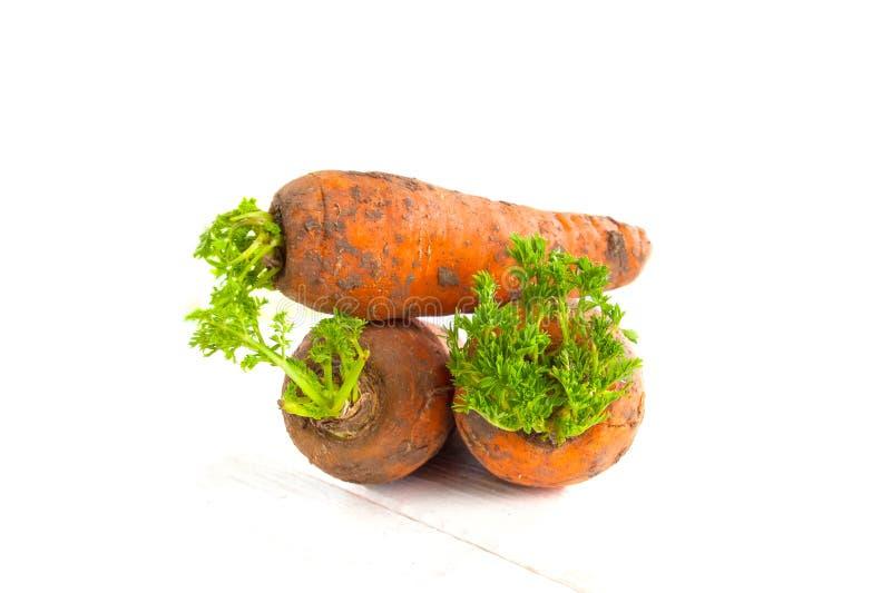 Trois frais-ont digéré de jeunes carottes avec des dessus sur un bois blanc photo libre de droits