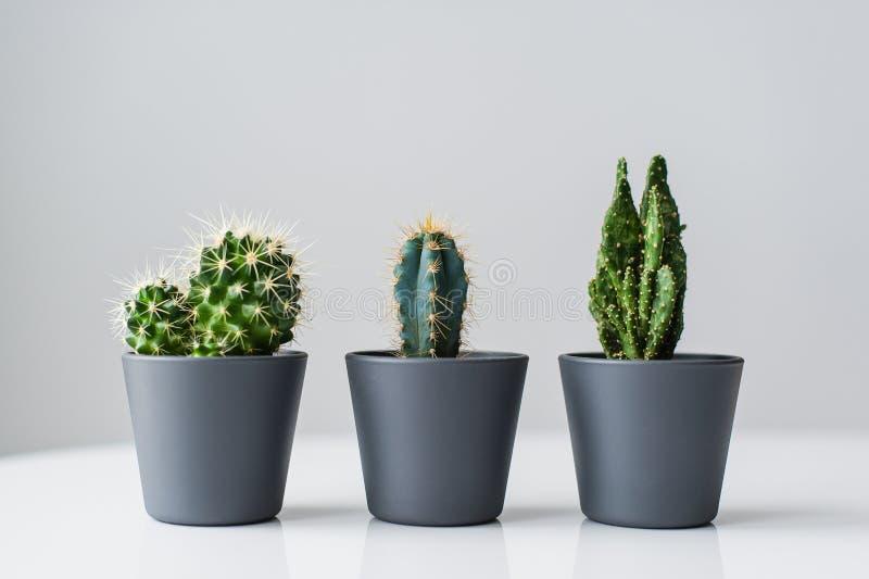 Trois genres de cactus verts sur un fond gris r image libre de droits