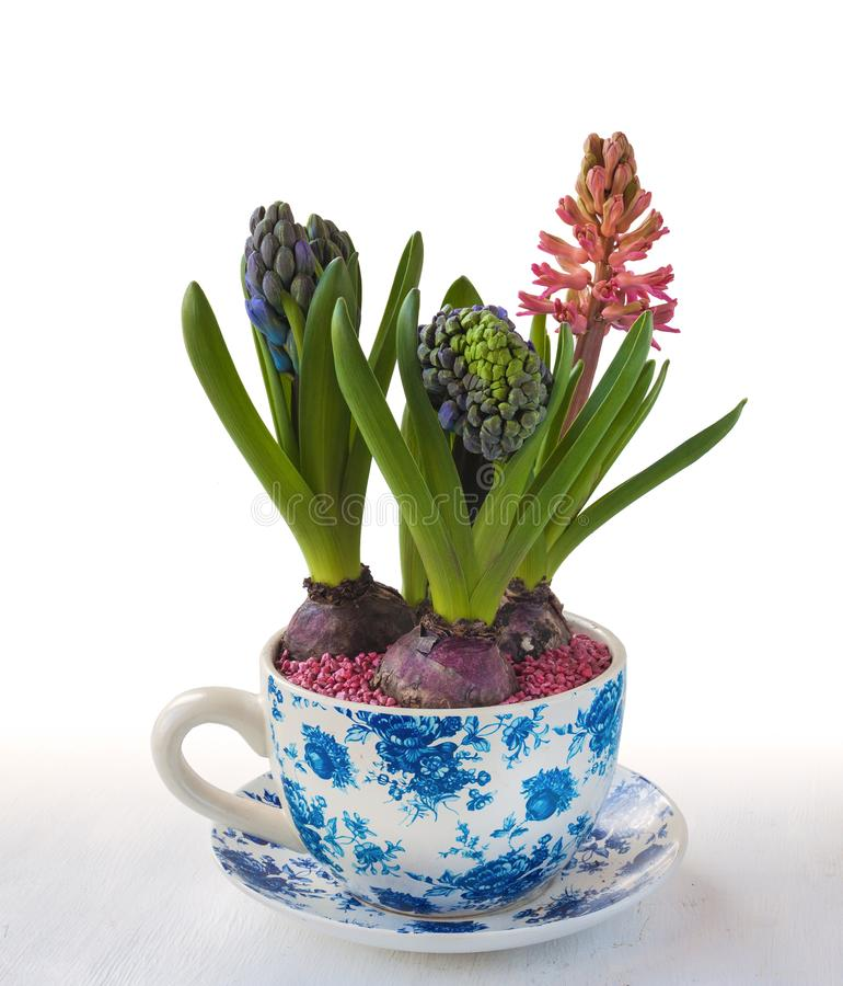 Trois jacinthes dans un pot de vintage image stock