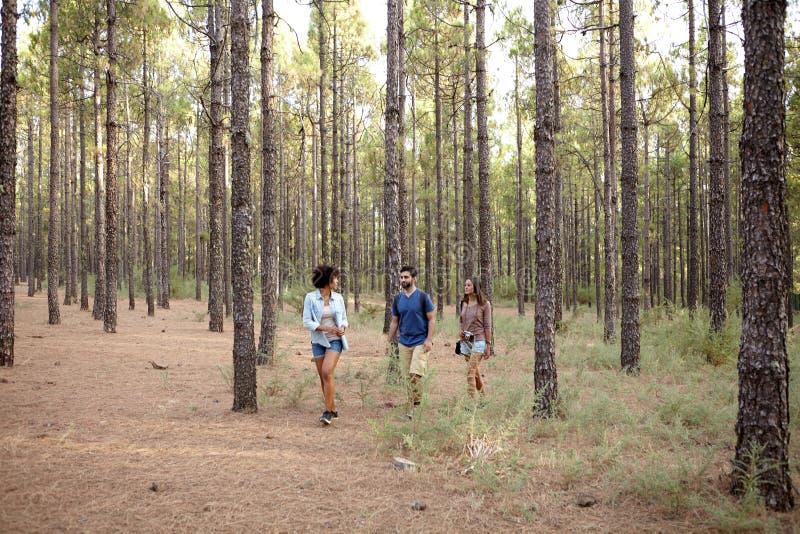 Download Trois Jeunes Amis Explorant Les Bois Photo stock - Image du noir, brun: 76080172
