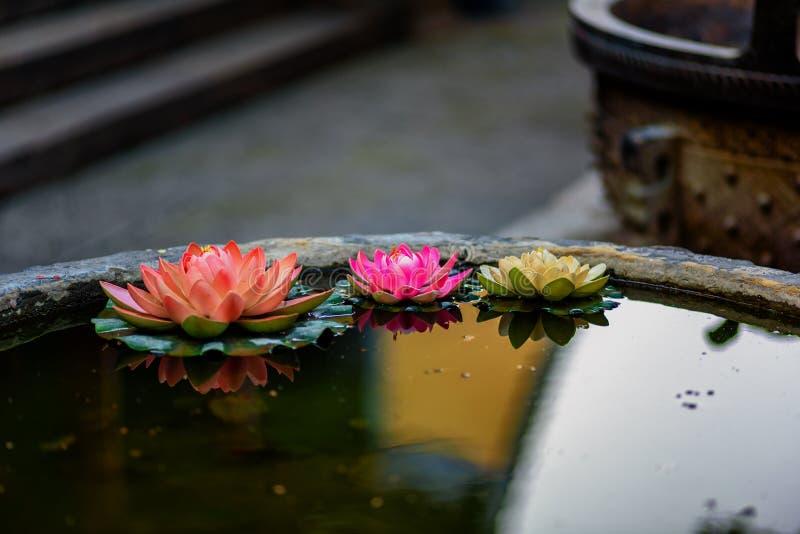 Trois Lotus dans le temple photographie stock