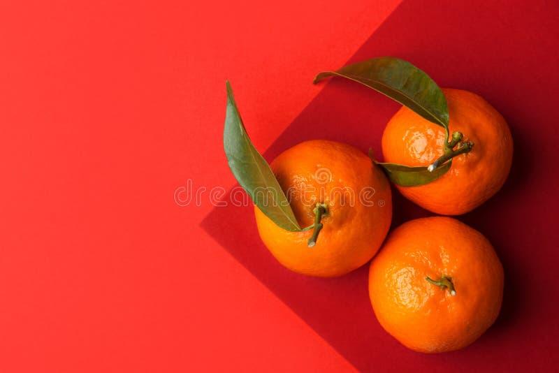 Trois mandarines crues lumineuses mûres sur la branche avec les feuilles vertes sur le fond cramoisi rouge orange de duotone grap images stock