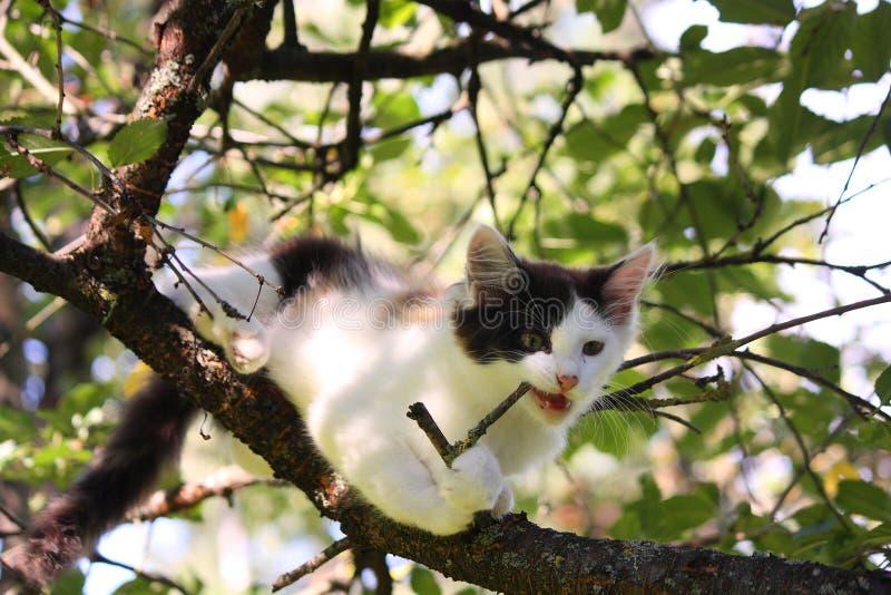 Trois mignons ont coloré le chaton rongeant sur la branche d'arbre photo stock