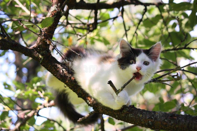 Trois mignons ont coloré le chaton rongeant sur la branche d'arbre photographie stock libre de droits