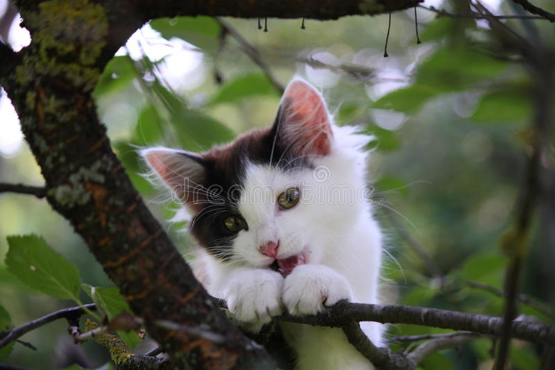 Trois mignons ont coloré le chaton rongeant sur la branche d'arbre images libres de droits