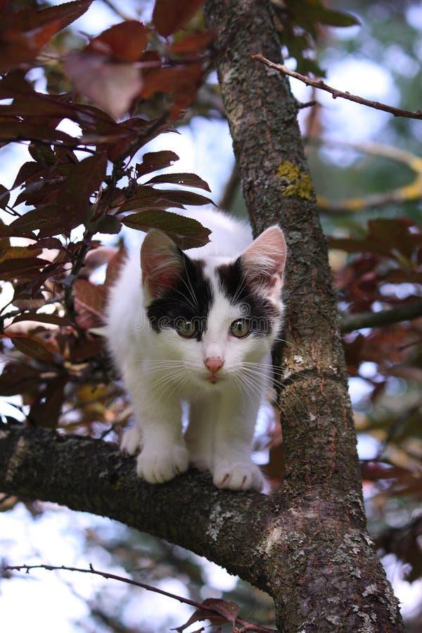 Trois mignons ont coloré le chaton s'élevant sur l'arbre photos libres de droits