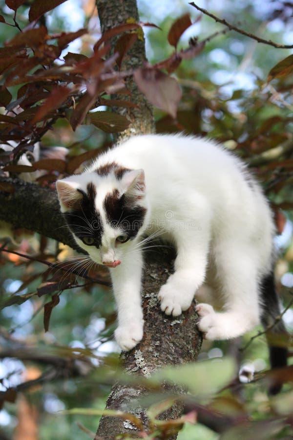 Trois mignons ont coloré le chaton s'élevant sur l'arbre photo libre de droits