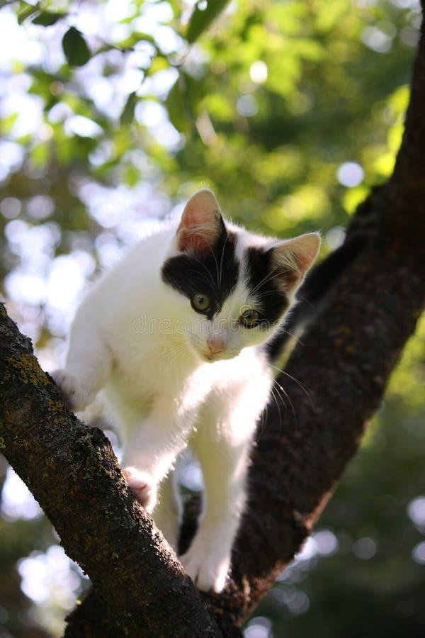 Trois mignons ont coloré le chaton s'élevant sur l'arbre image stock