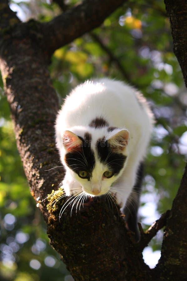 Trois mignons ont coloré le chaton s'élevant sur l'arbre photographie stock libre de droits