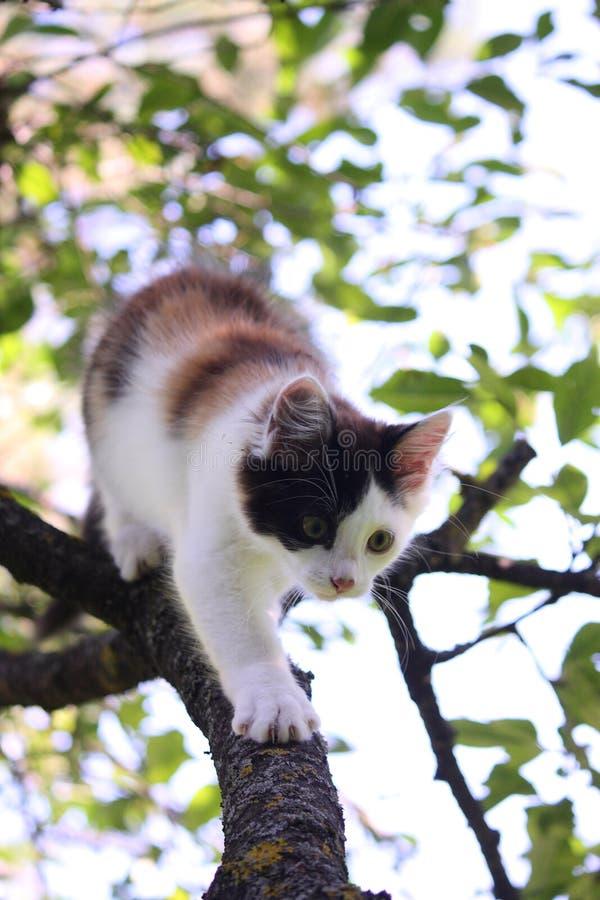 Trois mignons ont coloré le chaton s'élevant sur l'arbre photos stock