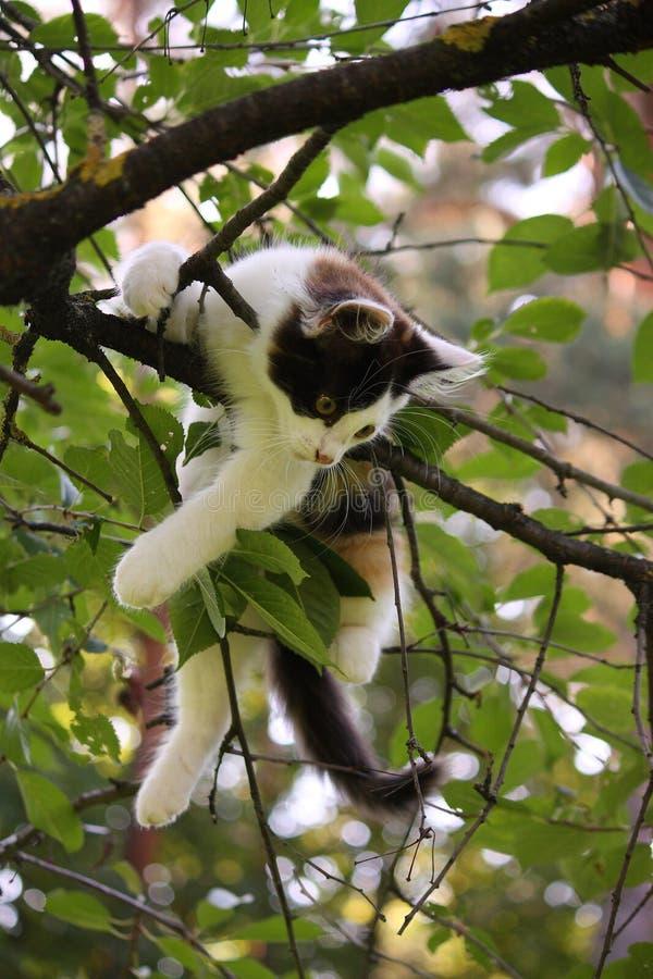 Trois mignons ont coloré le chaton s'élevant sur l'arbre image libre de droits