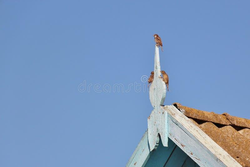 Trois moineaux sur la décoration de toit photographie stock libre de droits