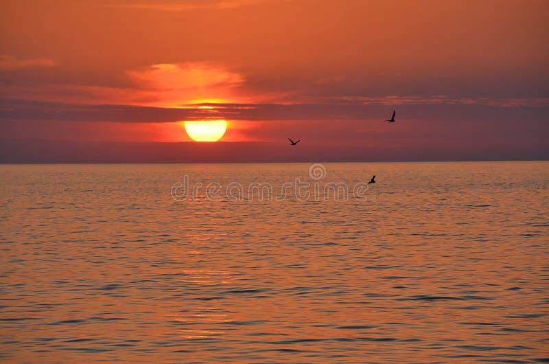 Trois mouettes au-dessus de la mer au coucher du soleil image libre de droits