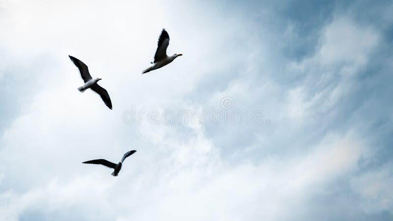 Trois mouettes dans le ciel image stock