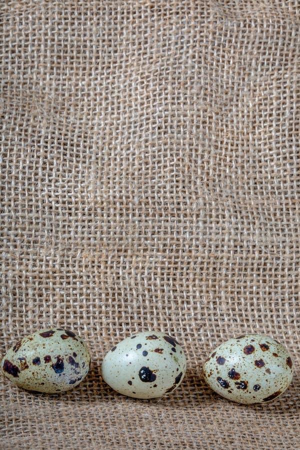 Trois oeufs de caille variés sur le fond de la toile de jute Plan rapproché photo stock
