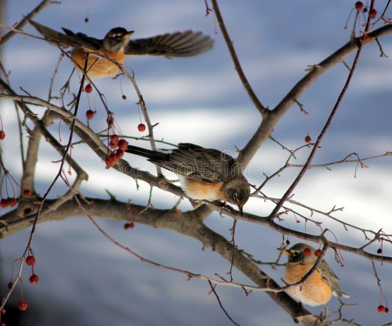 Trois oiseaux photo stock