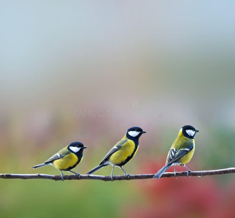 Trois oiseaux de titmouses photographie stock libre de droits