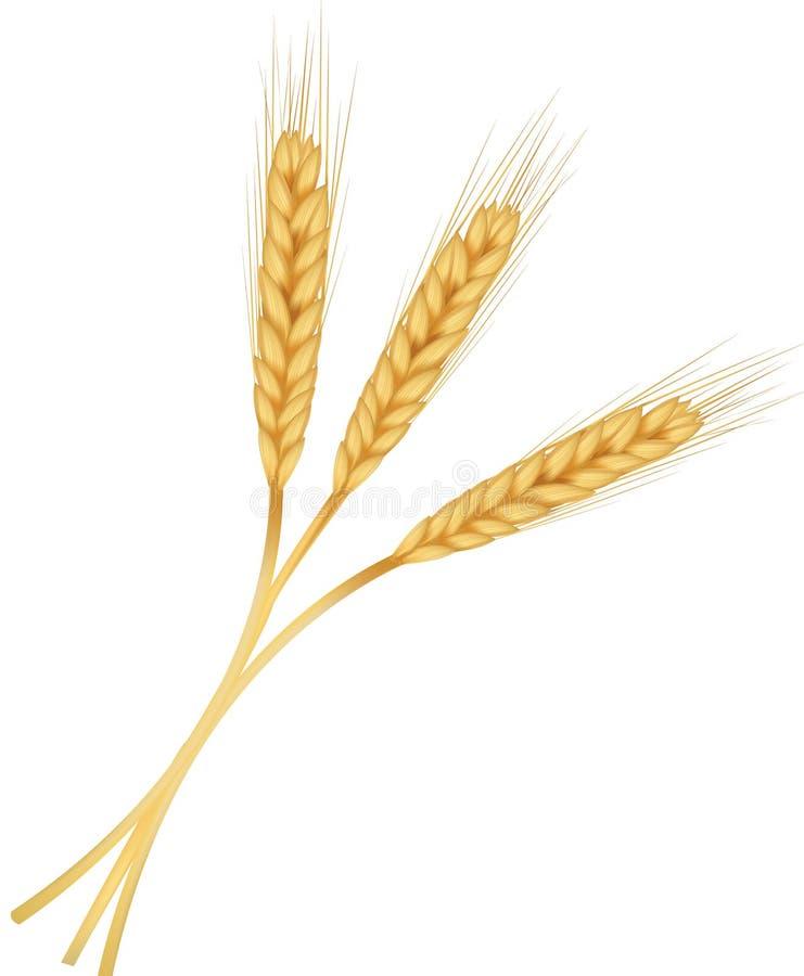 Trois oreilles de blé. illustration libre de droits
