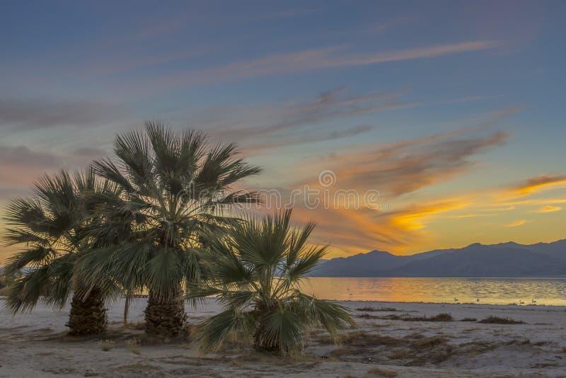 Trois palmiers au coucher du soleil image libre de droits