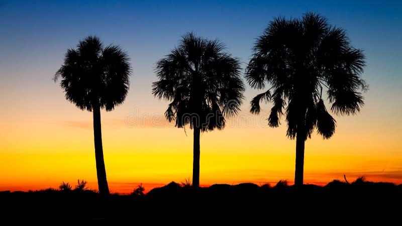 Trois palmiers au coucher du soleil photographie stock