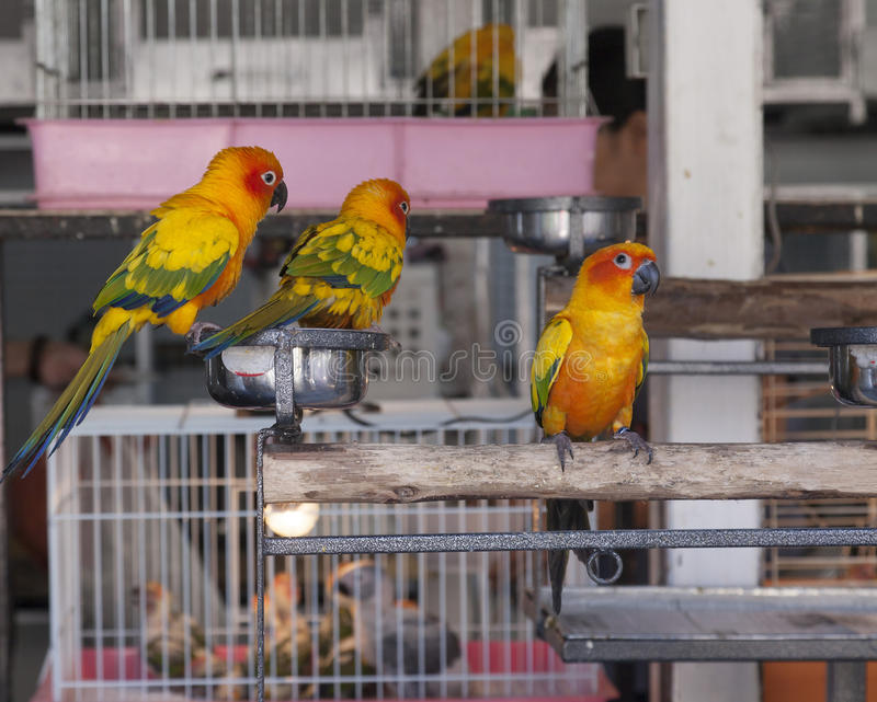 Trois perroquets photos stock