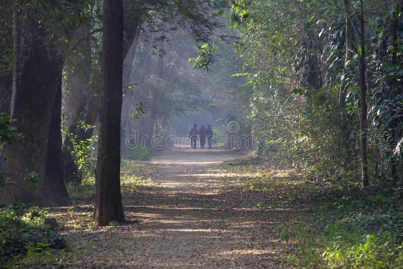 Trois personnes faisant le matin marchent pendant l'hiver, matin brumeux, campus universitaire de Pune, Pune image stock