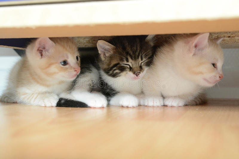 Trois petits chatons images stock