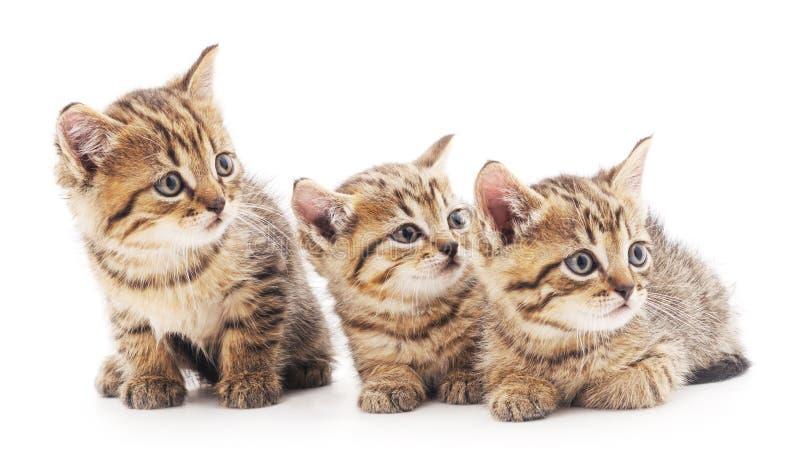 Trois petits chatons images libres de droits