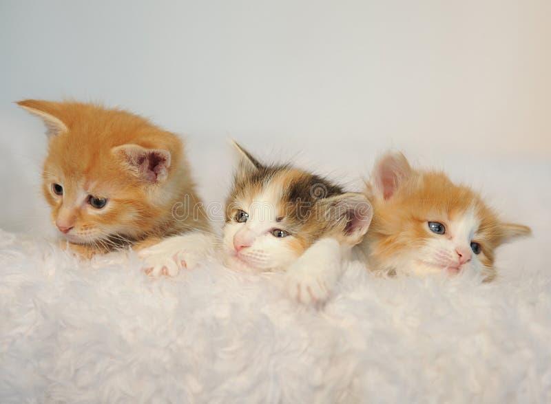 Trois petits chatons jetant un coup d'oeil hors d'une chaise pelucheuse blanche photo libre de droits