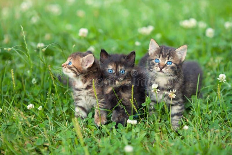 Trois petits chatons mignons image stock