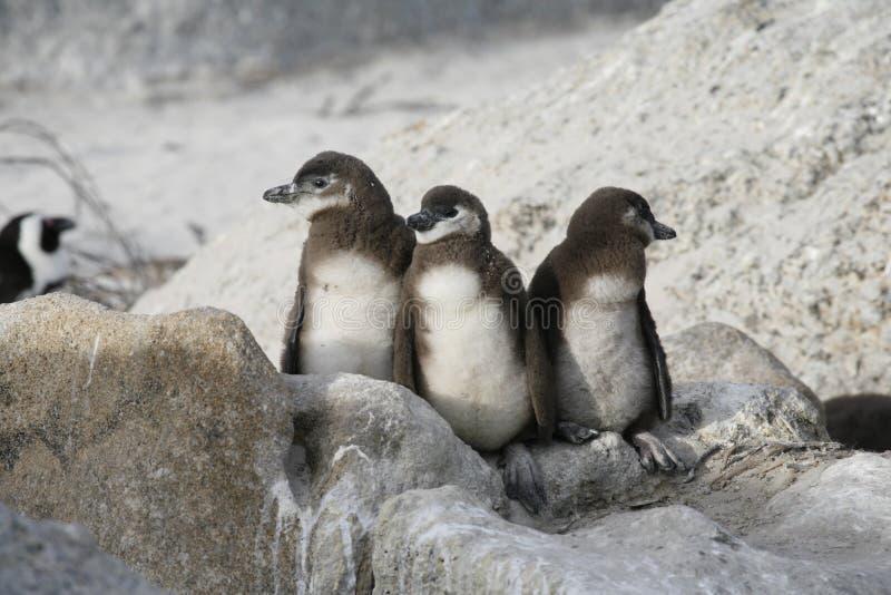 Trois pingouins images libres de droits